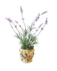French Seaside Lavender