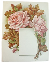 Antique Chromolithograph Print Pink Rose and Acorn