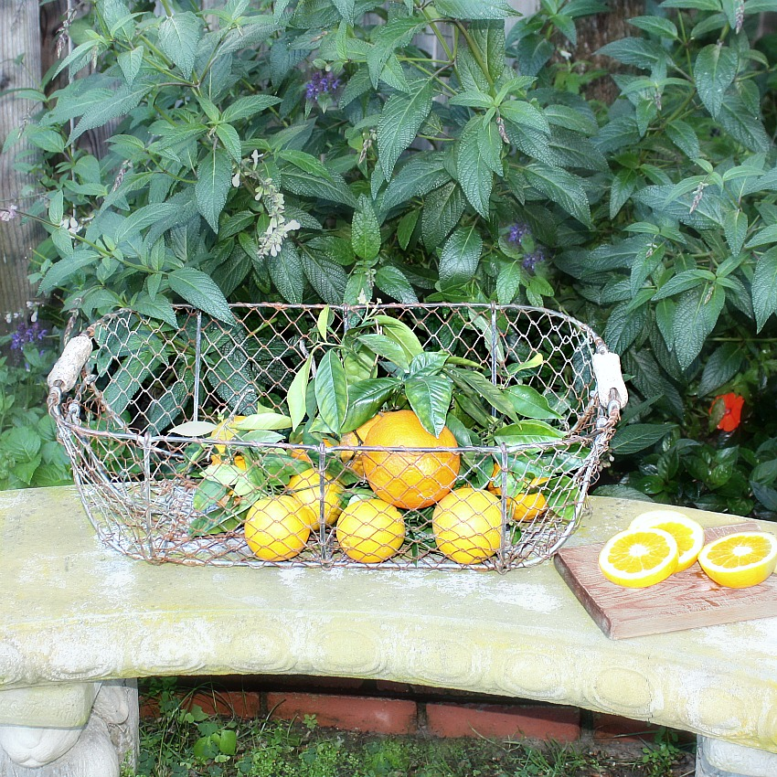 Antique French Harvesting Basket