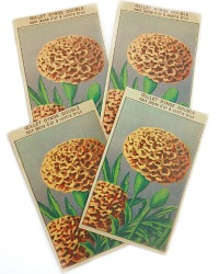 Antique French Chromolithograph Garden Ceillet Seed Labels Set of 4