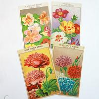 Antique French Chromolithograph Garden Flower Seed Labels Set of 4