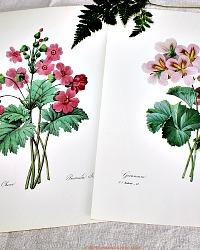 Botanical Floral Prints Set of 2 Geraniums Redoute