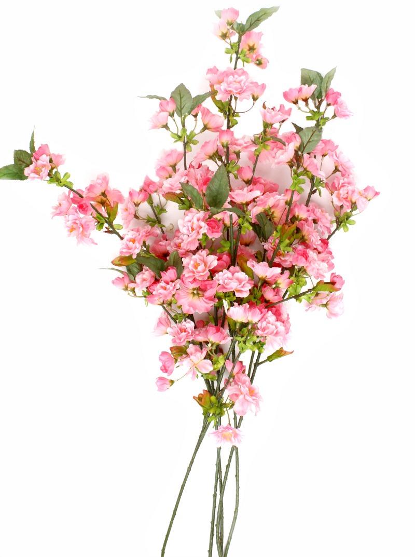 Blossom Dreams