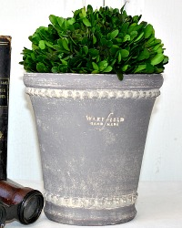 Peter Wakefield Grey Pot with Boxwood Topiary