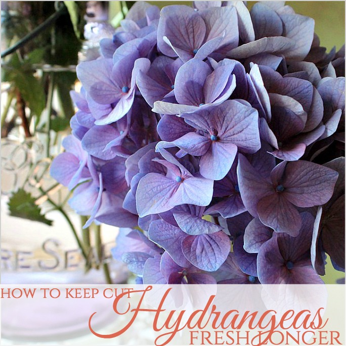 How To Keep Cut Hydrangea Flowers Fresh Longer French Garden House