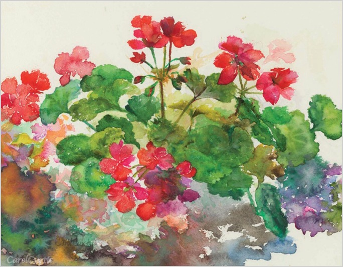 FrenchGeraniums