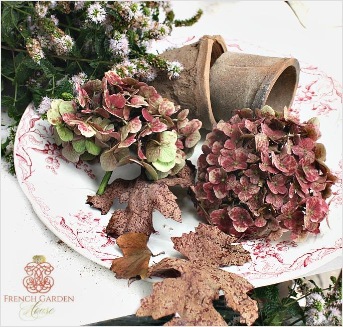 russethydrangea